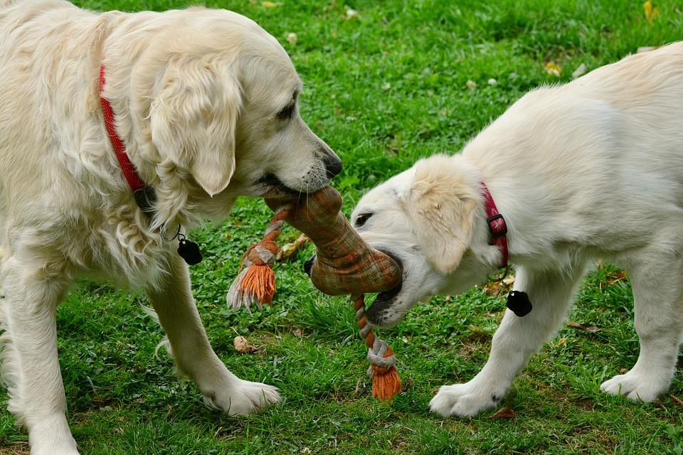 犬 甘噛み しつけ
